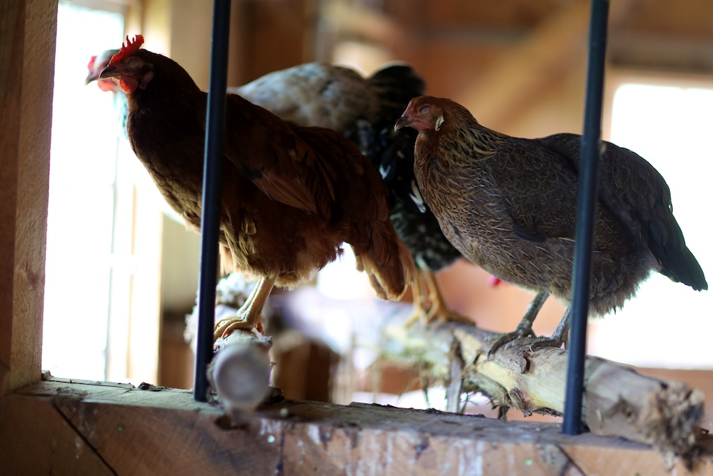 On the Justice of Roosting Chickens