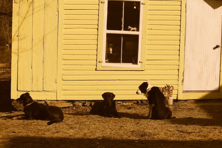 Dogs Of Bedlam Farm