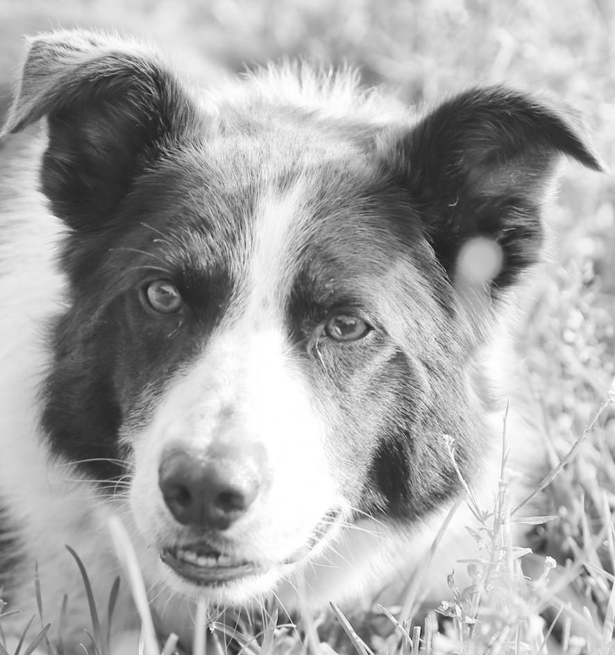 Lifetime Dog
