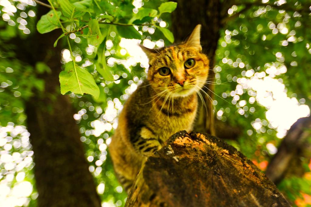 flo retired barn cat in the apple tree bedlam farm. Black Bedroom Furniture Sets. Home Design Ideas
