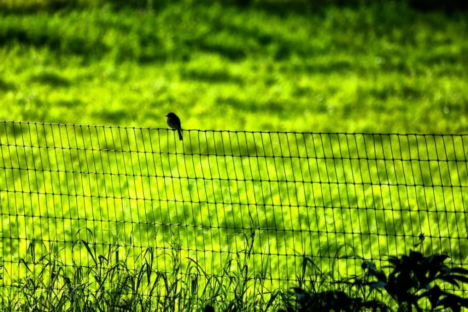 My Bird, My Bird
