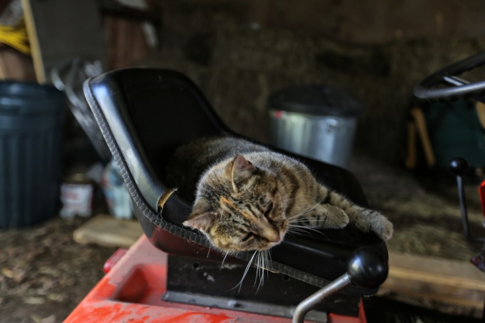 Flo On The Mower