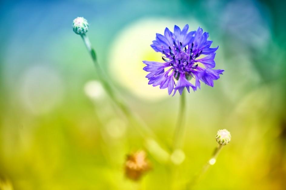 Wildflower Album
