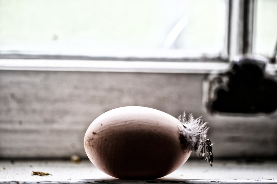Windowsill Gallery, The Daily Egg