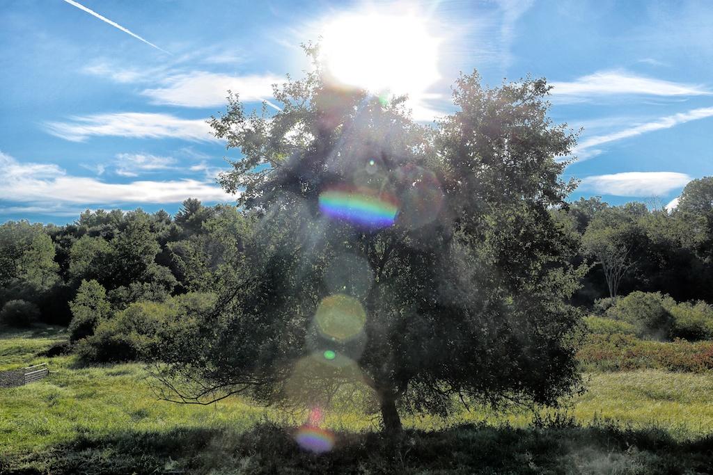 Sunrise Apple Tree Sunrise Over The Apple Tree