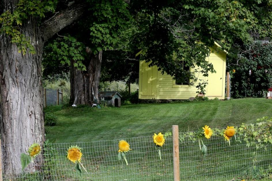 Sunflower Gallery