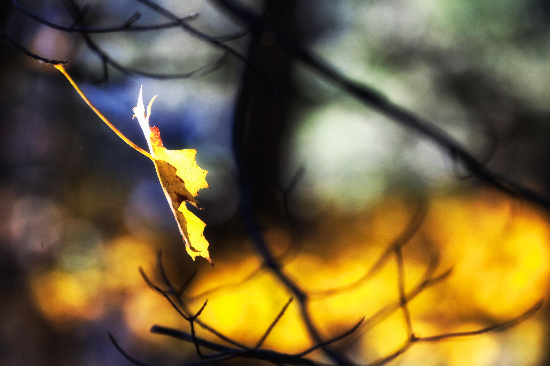 poem  last leaf  re