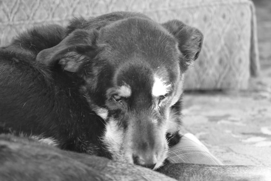Divine Old Dog