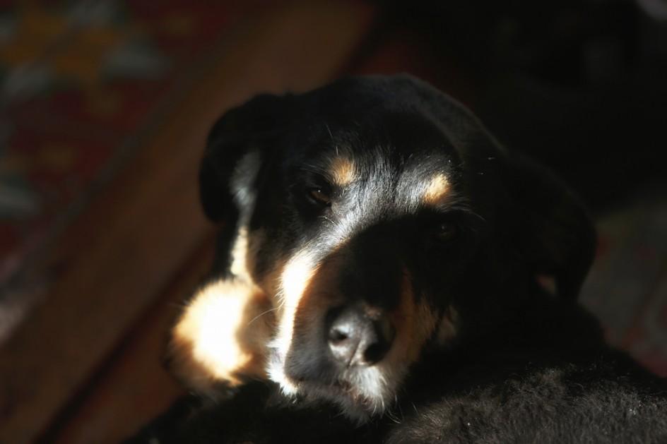 The Divine Old Dog