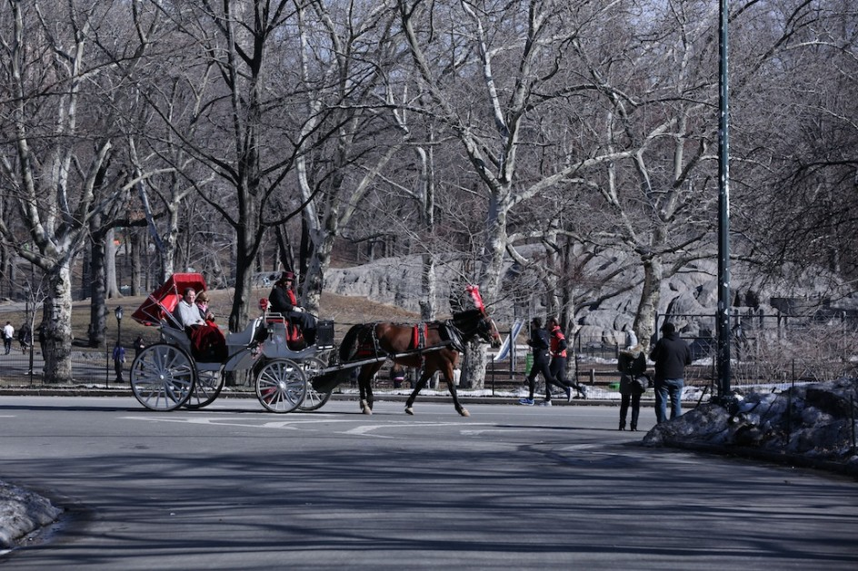 First They Came For The Carriage Horses