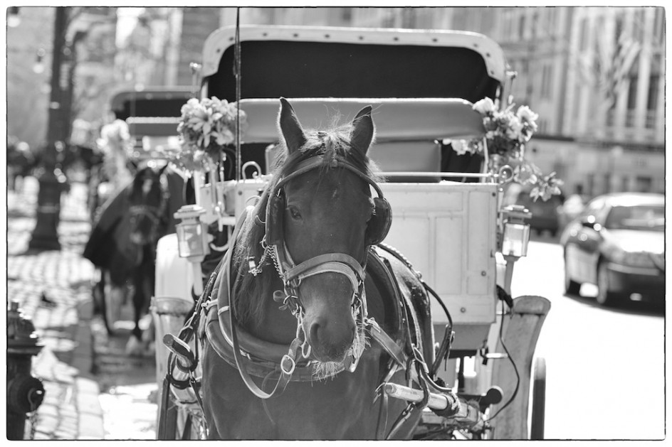 Can A Carriage  Horse Have An Accident?