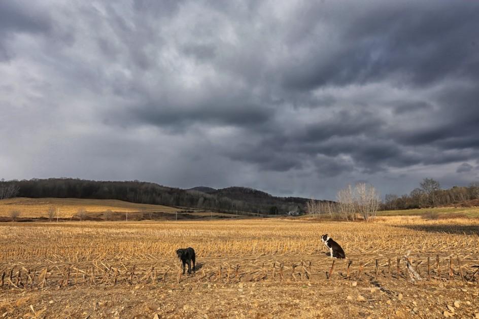 In The Cornfield: Bedlam Farm