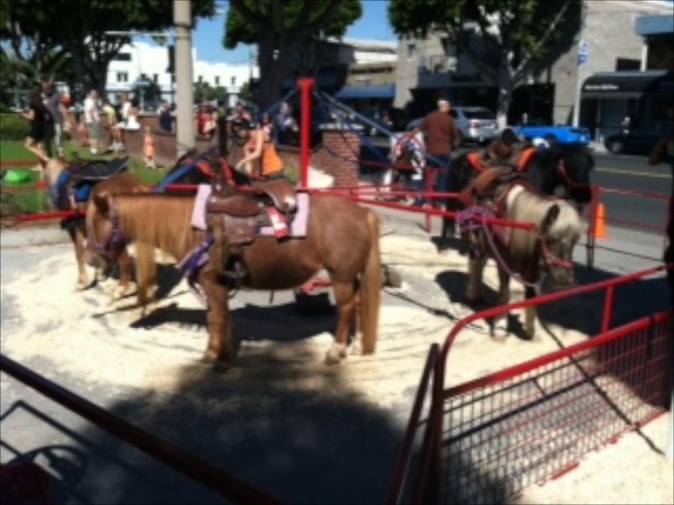 Tawni's Pony Rides