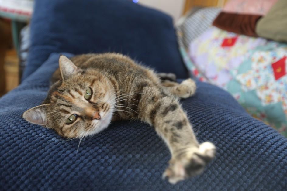 Barn Cat's Spa
