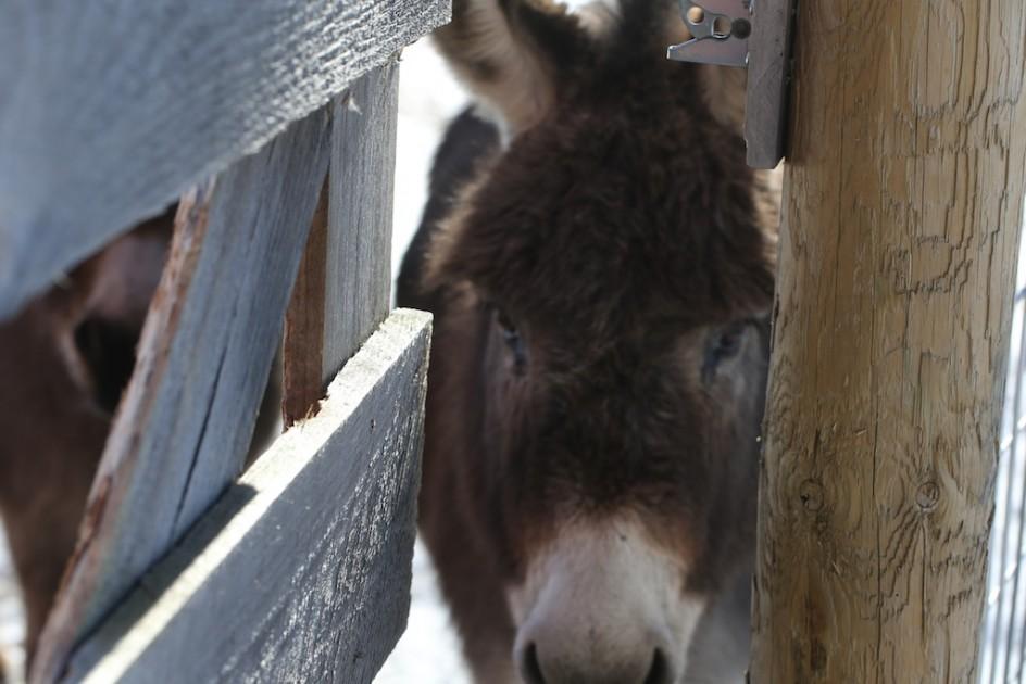 Lulu Peeking Out