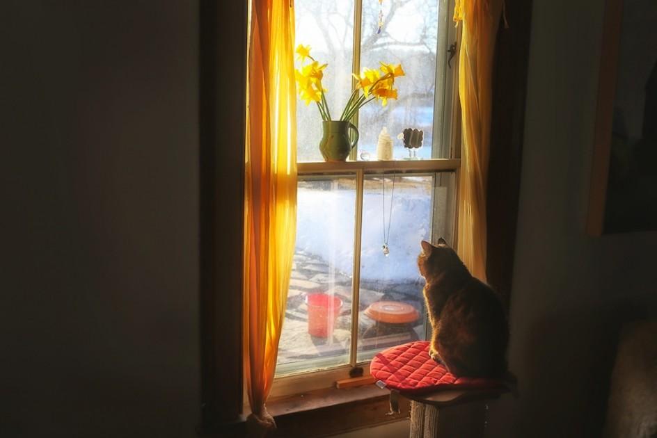 Barn Cat's Sunrise