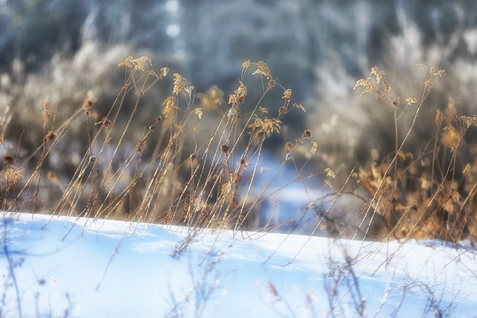 The Winter Meadow