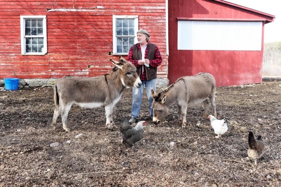 Visit To The Donkeys