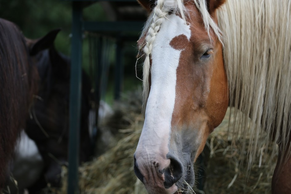 Can I Love A Horse Kill Buyer?