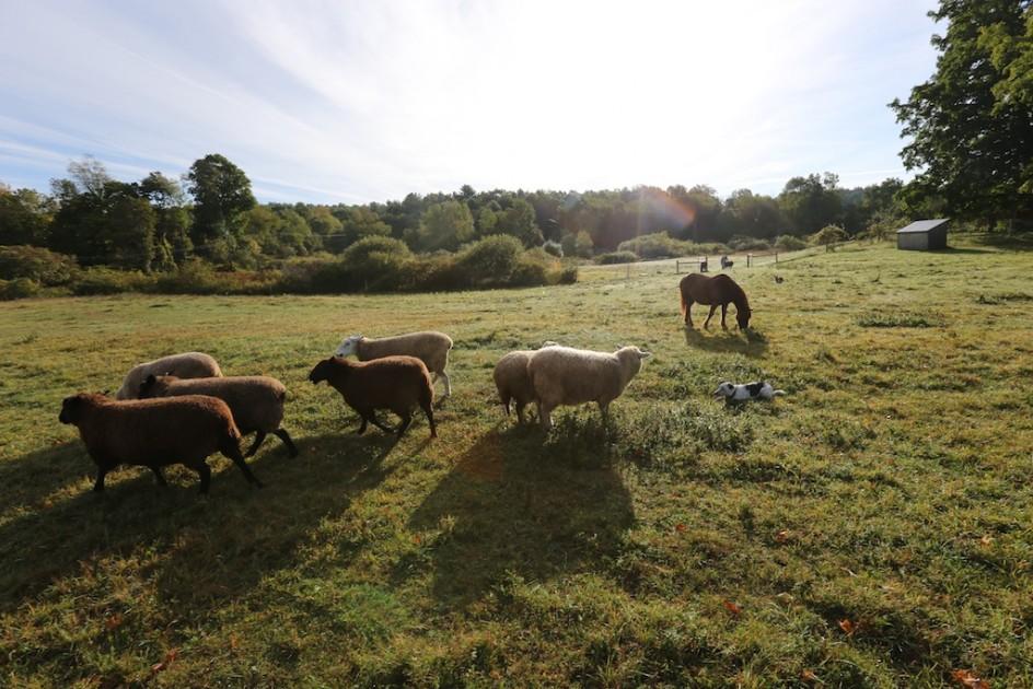 Sheep Time