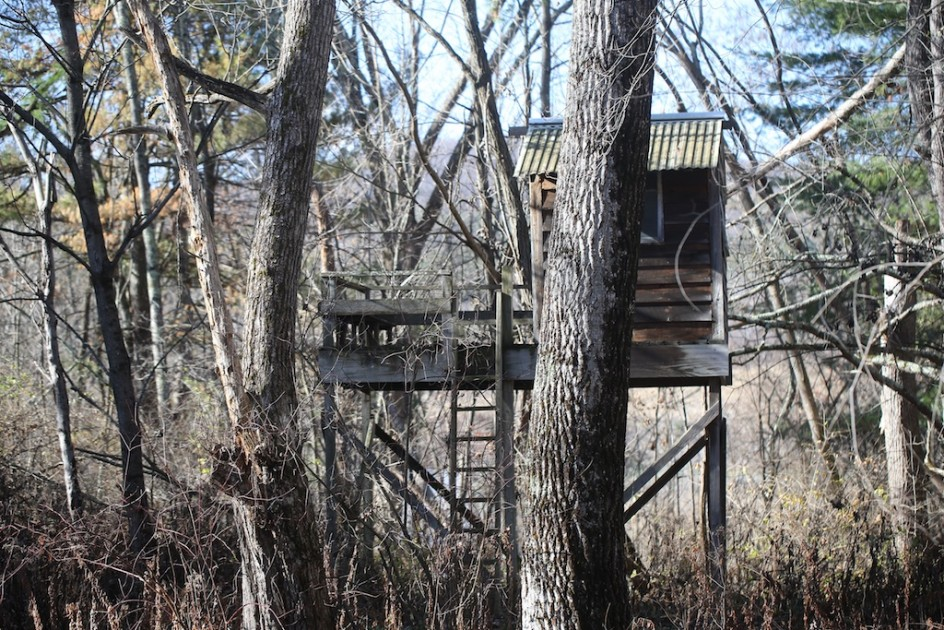 the tree house in the woods bedlam farm journal bedlam. Black Bedroom Furniture Sets. Home Design Ideas
