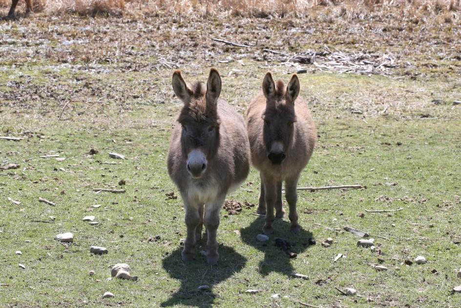 Lulu and Fanny