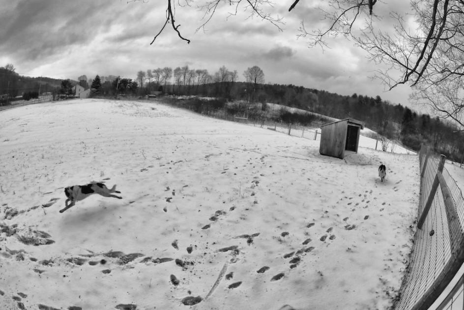 Snow For The Joy Dog
