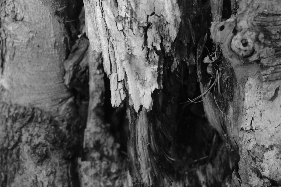 Tree trunk art cont bedlam farm journal bedlam farm for Tree trunk art