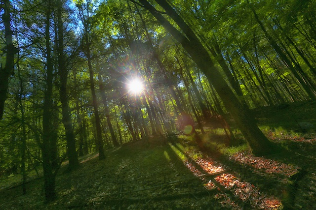 First Light In The Deep Woods Sounds Of A Soul Awakening