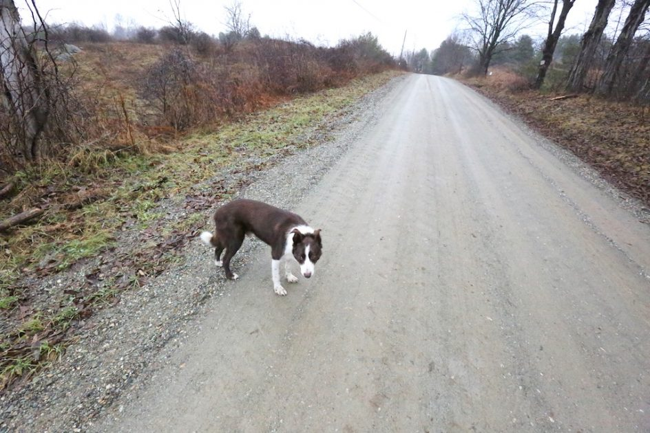 Training Me To Walk