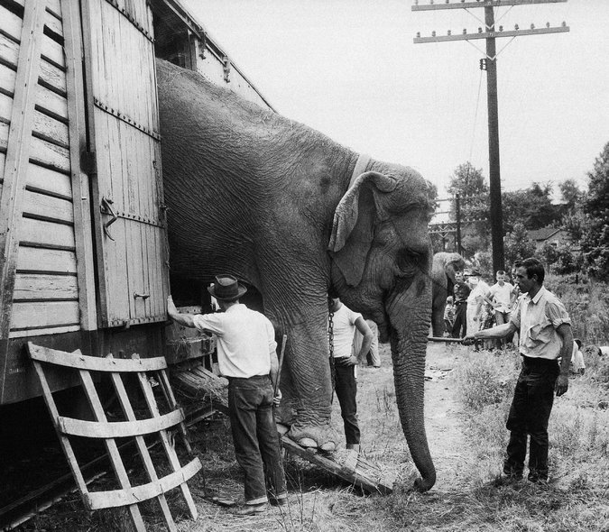 The Circus Travesty: Do Your Dogs And Cats Entertain You ...
