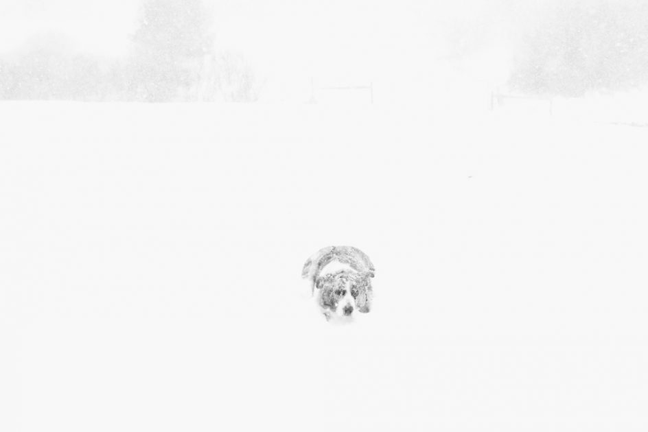 Whiteout: Red In The Pasture - Bedlam Farm Journal Bedlam ...